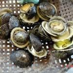 Đặc sản ốc vú nàng biển Côn Đảo